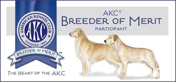 Honadore Labrador Retrievers | Labrador breeders Michigan